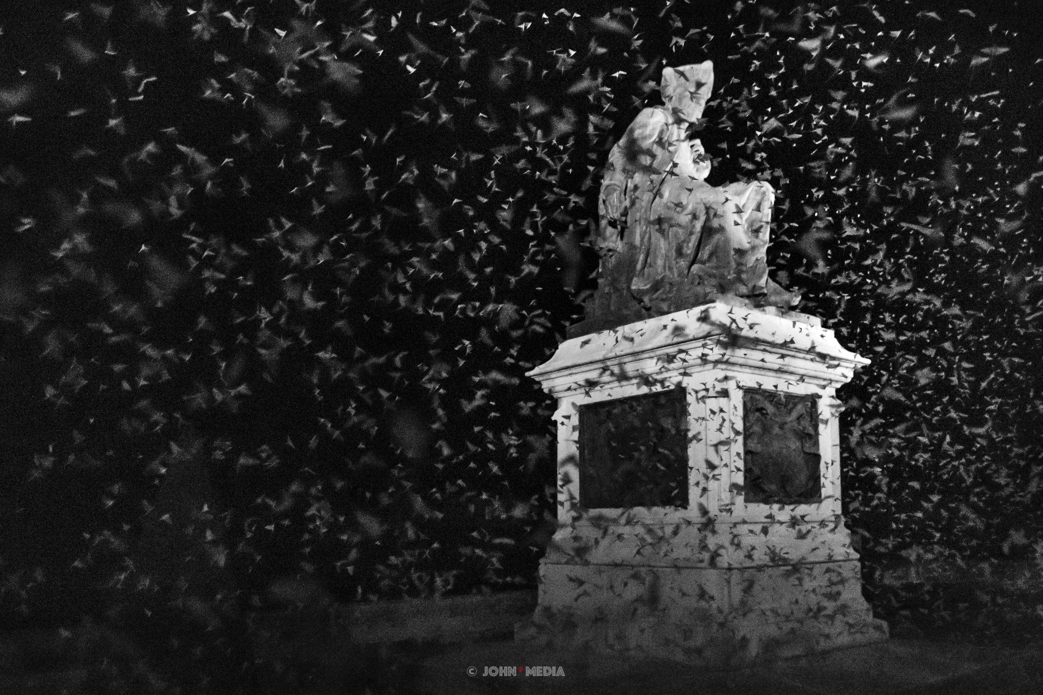 Chinon swarm