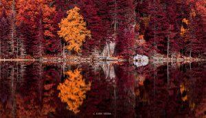 Autumn leaves New Hampshire