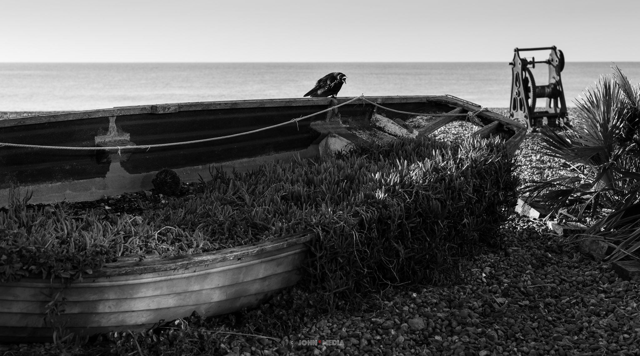 Brighton crow