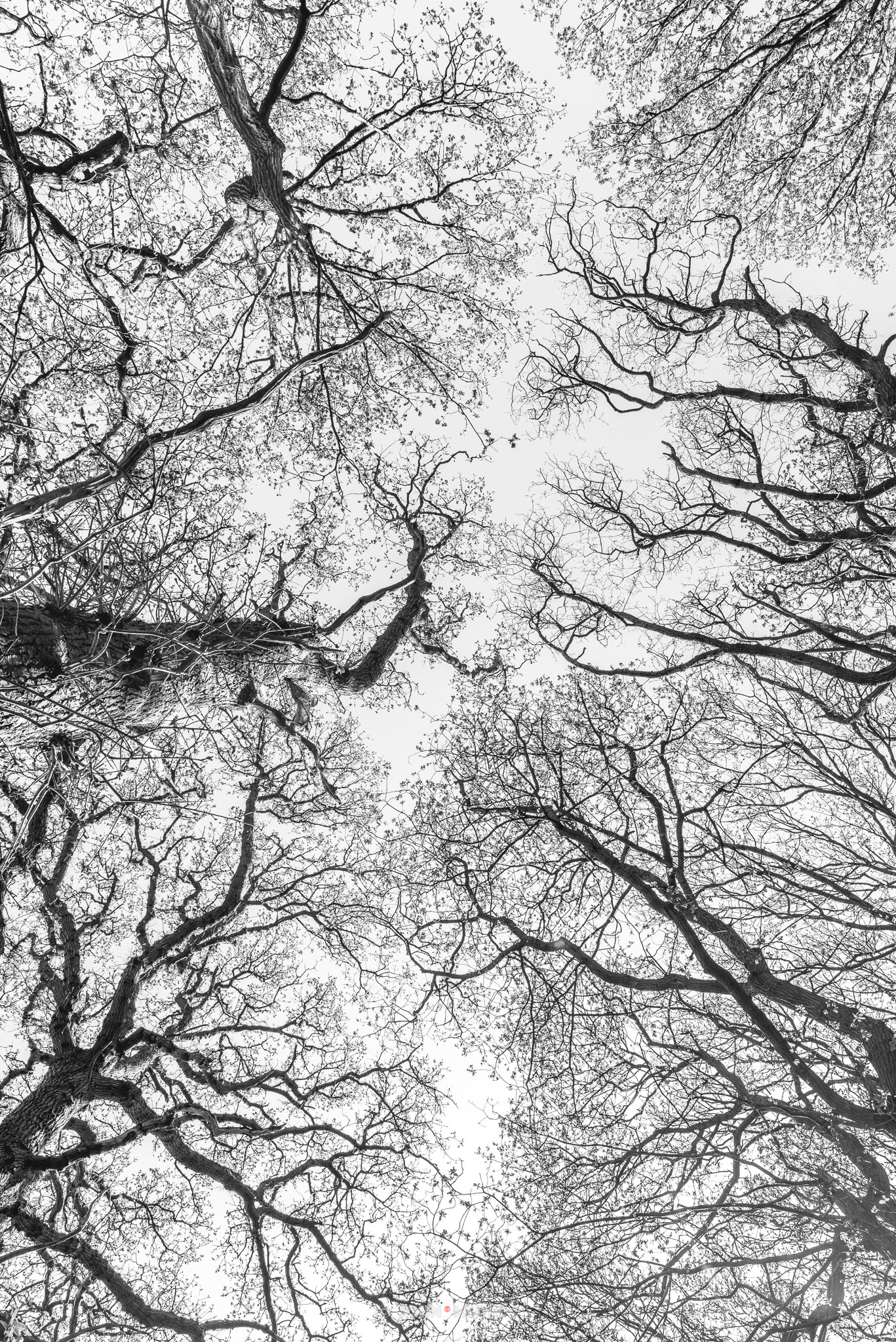 Oriental tree art