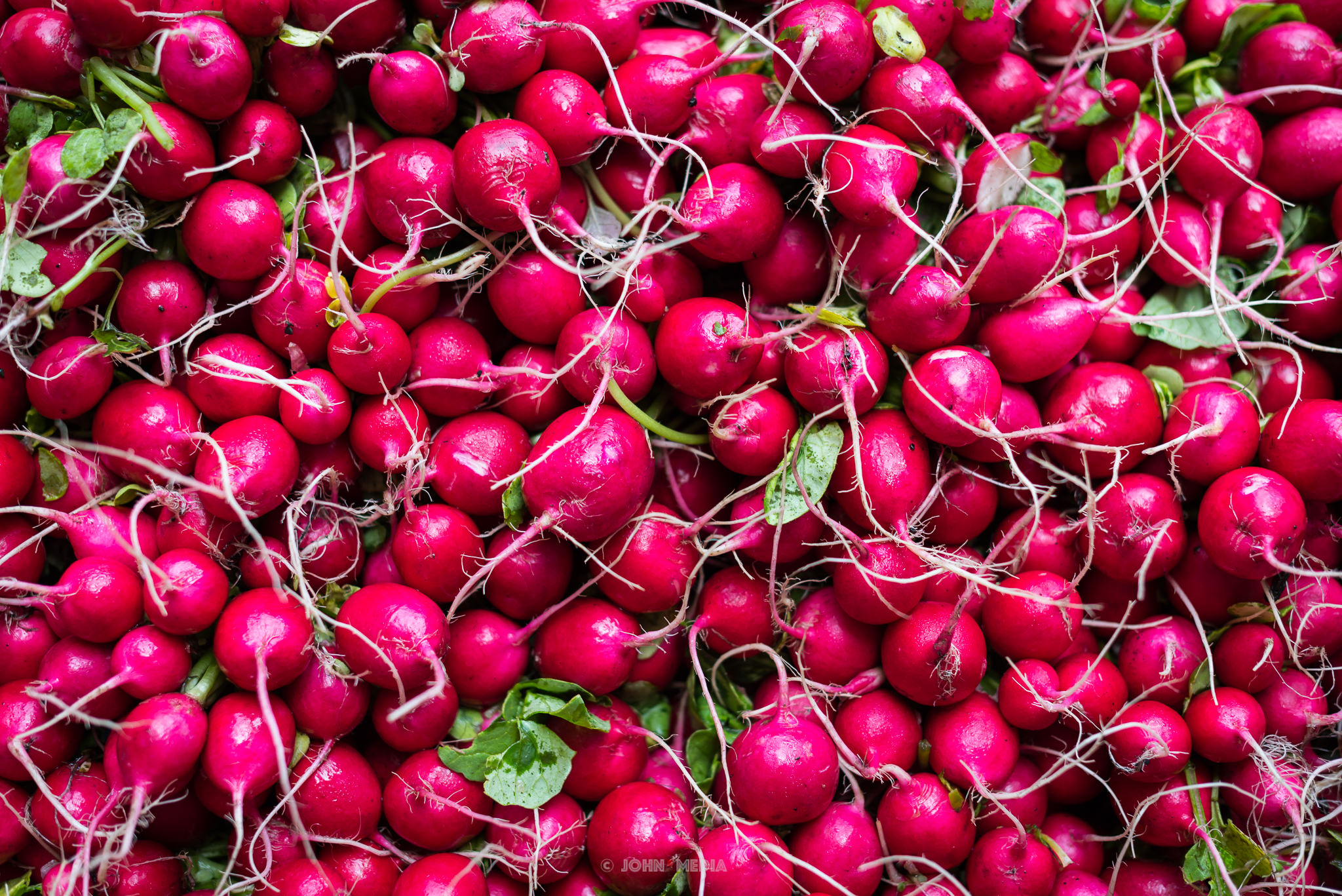 New York Groceries - Radishes