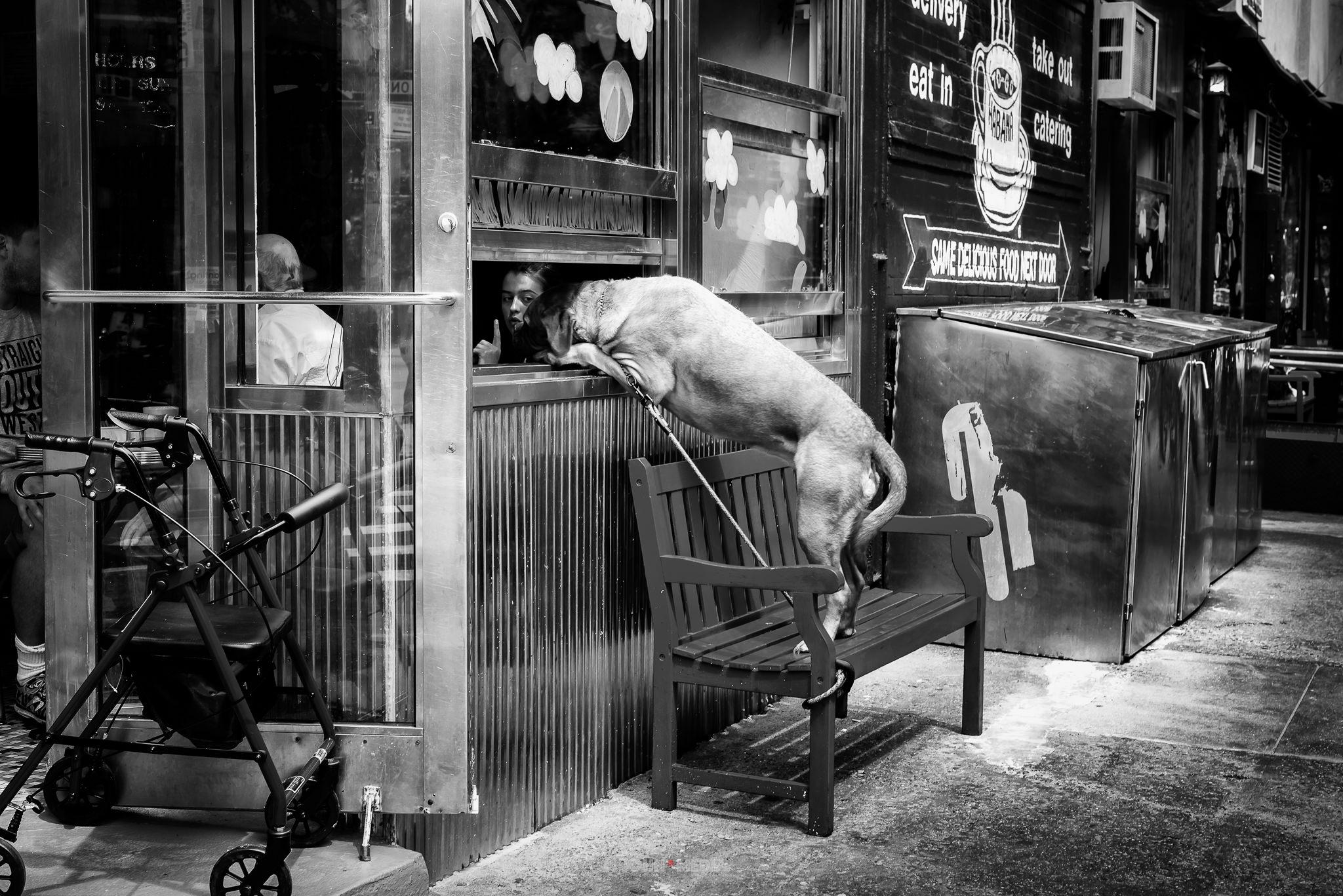 Manhattan Soho - do not feed the dog