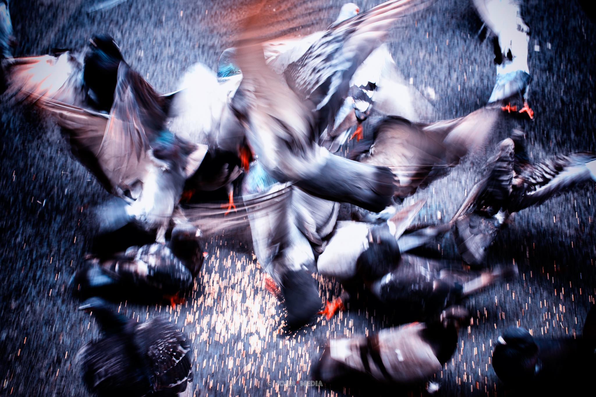 New York birds