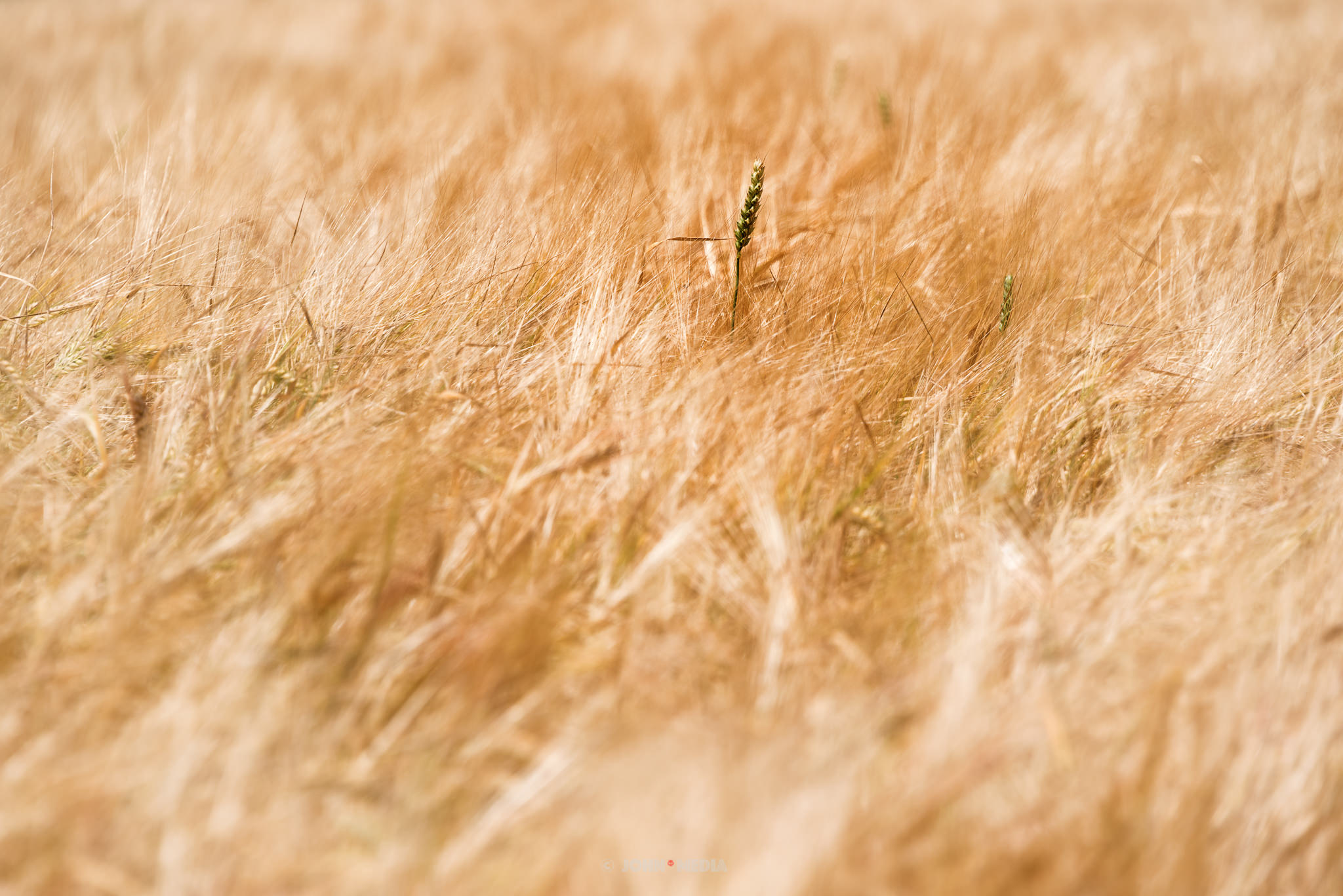 In the long grass